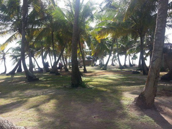 10569802 10152596365063748 1186864229 o 600x450 - Narasgandup cabaña Miro, Camping, Dorm or Private.